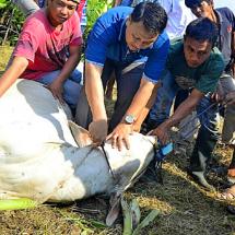 PKS Distribusikan 76 Ribu Hewan Kurban dari Aceh hingga Papua